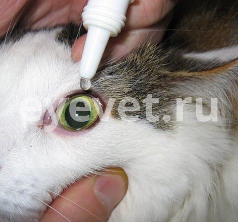 повреждение глаза у кошки