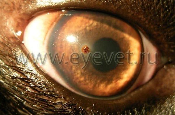 Травма глаза у собаки и кошки – лечение в нашем центре